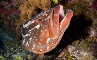 Picture of diving in little Cayman
