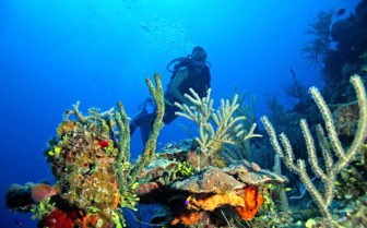 Picture of diver and coral Andros Island