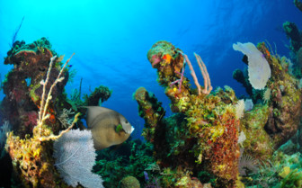 Picture of reef and a fish Andros Island