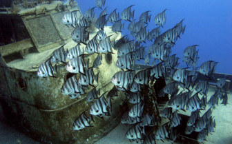 Picture of school of fish by a wreck New Providence