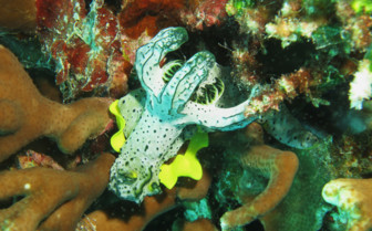 Picture of diving in Raja Ampat