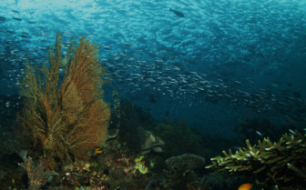 Picture of Sea life Raja Ampat