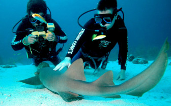 Picture of shark diving in the Abacos