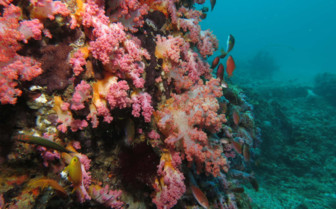 Picture of Diving at Malapascua