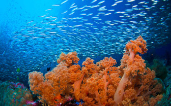 Picture of sea life Moalboal