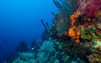 Picture of a Belize coral reef