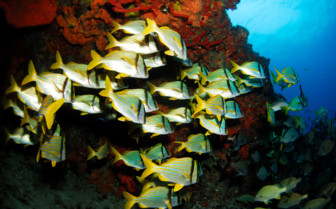 Picture of diving in Belize