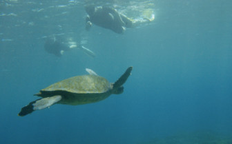 Picture of a turtle in the Galapagos