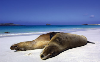 Picture of sea lions on the beach in the Galapagos