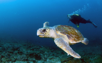 Picture of Sea turtle Bazaruto Archipelago