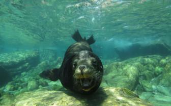 Picture of Sea lion Baja California