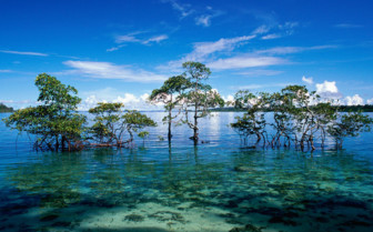 Picture of the Andaman and Nicobar Islands