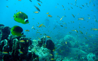 Picture of butterflyfish