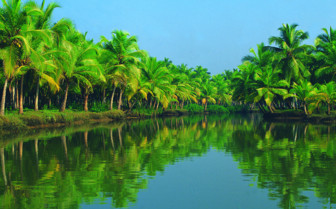 Picture of palm trees in India