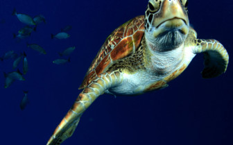 Picture of a turtle close up