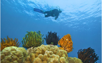 Picture of diving in Indonesia
