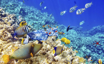 Bright Yellow And Blue Fish Seen Whilst Diving