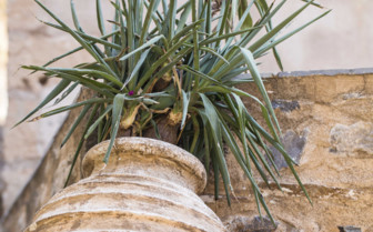 Terracotta Plant Pot