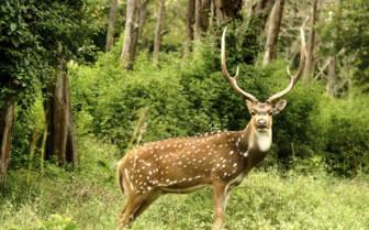 Wildlife in the woods