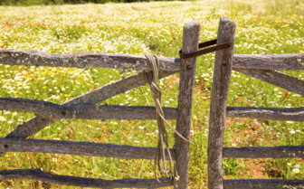 A Wooden Gate in Spring