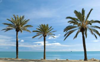 Palms Lining the Beach in Malaga