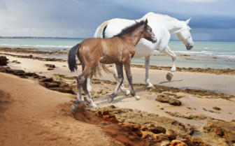 A Mare and her Foal on the Beach