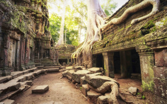 Roots Overtaking the Temples