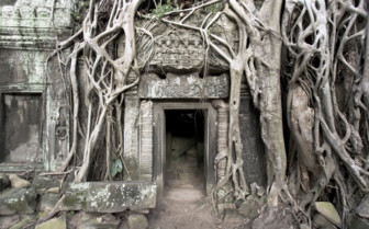 Tree Roots Around a Wat Entrance