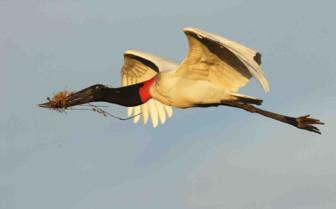 Soaring Bird in the SKy