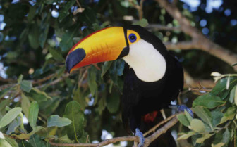 Toucan Inquisitive