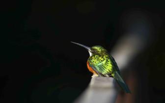 Small Green Bird