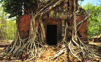 Koh Ker Temple Doorway Surrounded by Tree Roots