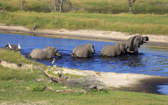 Elephants at water crossing