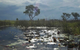 Swamp in Okavango Delta