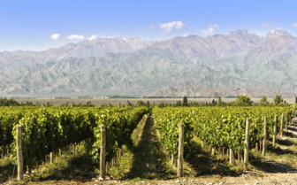 Vineyards leading to mountains