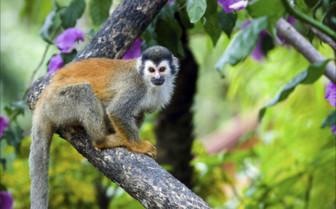 Wildlife of Peninsula Papagayo