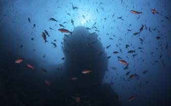 Marine life in Pacific Ocean