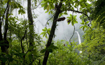 Tropical rainforests of Costa Rica