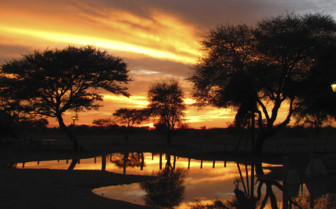 Trees in shadow against sunset sky in Etosha