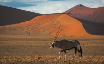 Desert wildlife in Africa