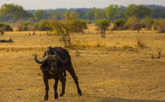 Wildlife of Zambia