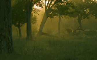 Misty morning in South Luangwa