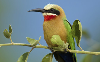 Colourful bird in Africa