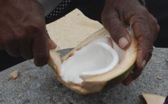 Coconut carving, Fiji