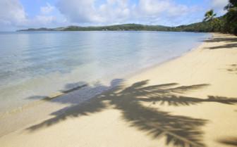 Palm tree shadow, Fiji