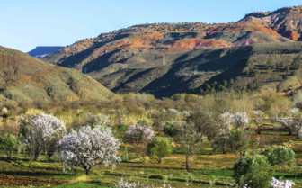 Fruit farm in the Atlas mountains