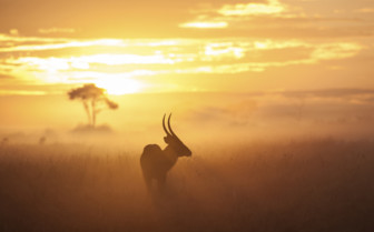 Masai Mara sunset
