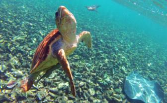 Snorkelling at Ambergris Caye