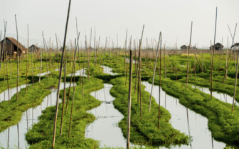 Floating gardens Inle Lake