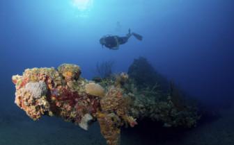 Scuba diver with sea fan